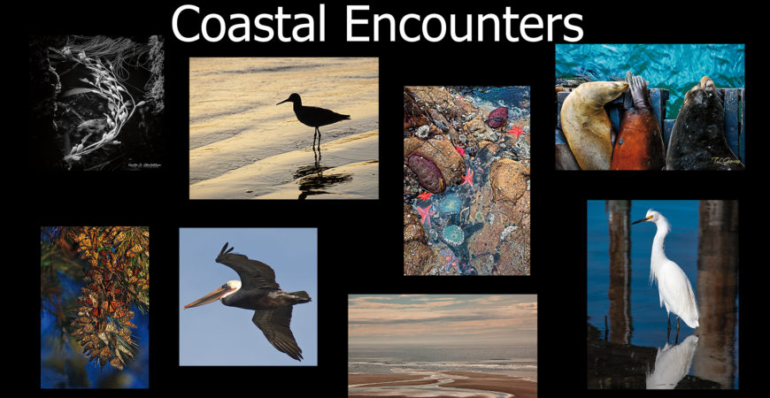 Coastal Encounters, Featured Artists Show, July 2021